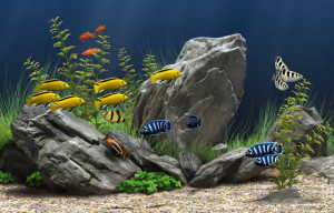 buy fish tanks in Racine, WI