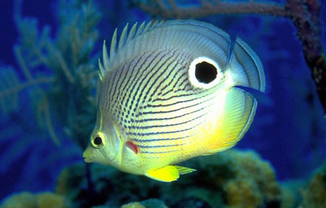 Saltwater fish petland st louis missouri for Where to buy saltwater fish